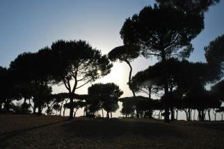 Roma - pineta a villa Pamphilj (2012)